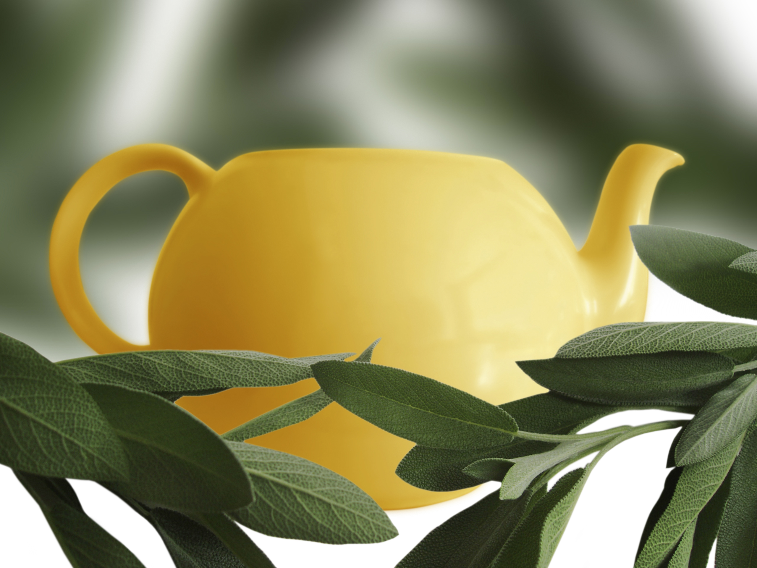 http://www.dreamstime.com/stock-photo-sage-and-teapot-rimagefree3141656-resi3857824